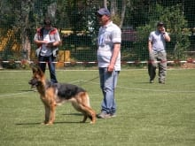 german_shepherd_1