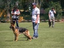 german_shepherd_1