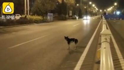 f2e28cf2f9c2 Σκύλος στέκεται εδώ και 80 ημέρες στο σημείο που σκοτώθηκε η ιδιοκτήτριά του